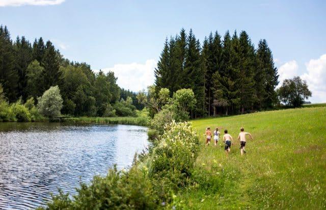 Moos-Wiesen-Wald-See-Runde-Badesee_c_CampingamBadesee-TomLamm